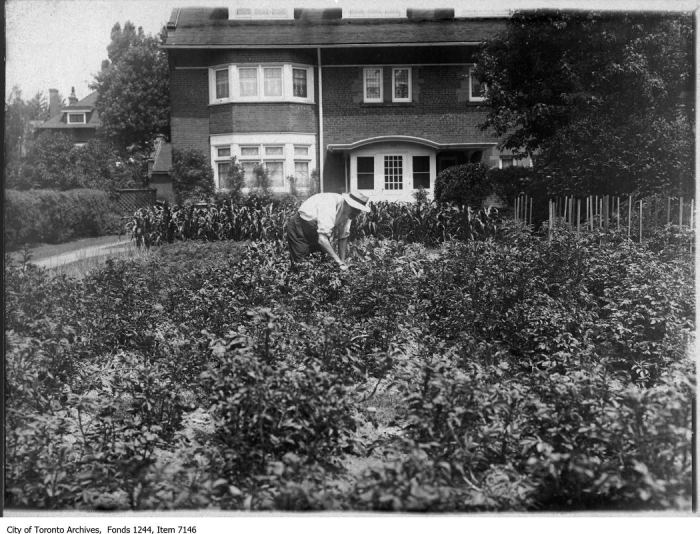 Victory Garden on front lawn, Crescent Road. - [ca. 1916]